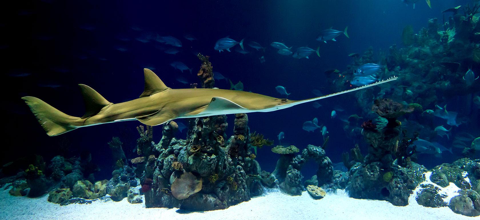 Entradas acuario de barcelona for Precio entrada aquarium