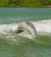 The Dolphin Encounter Tour and Clearwater Beach