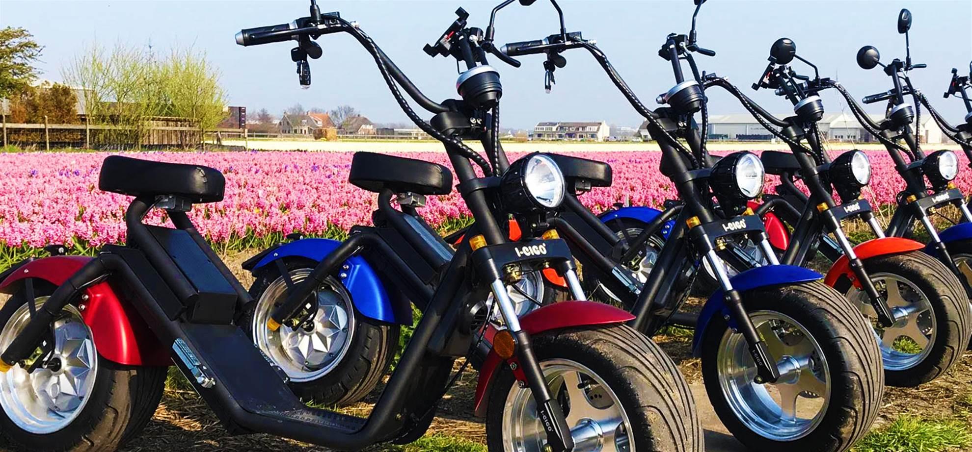 Flower Tour - Zomereditie (inclusief Dahlia bloemenvelden) (Actief en Boekbaar)