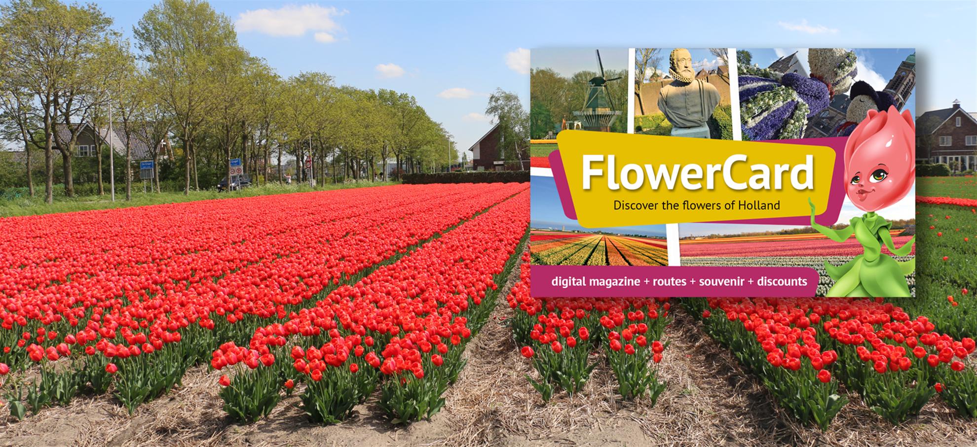 Tarjeta Flor (FlowerCard) (Fuera de temporada)