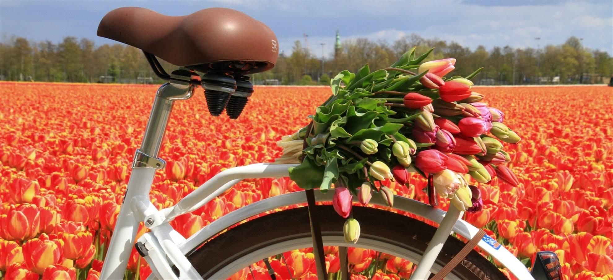 Aluguer de bicicletas em Lisse (Keukenhof) + audioguide Flowerfield