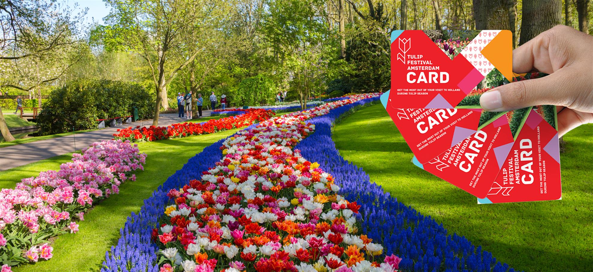 Карта фестиваля тюльпанов