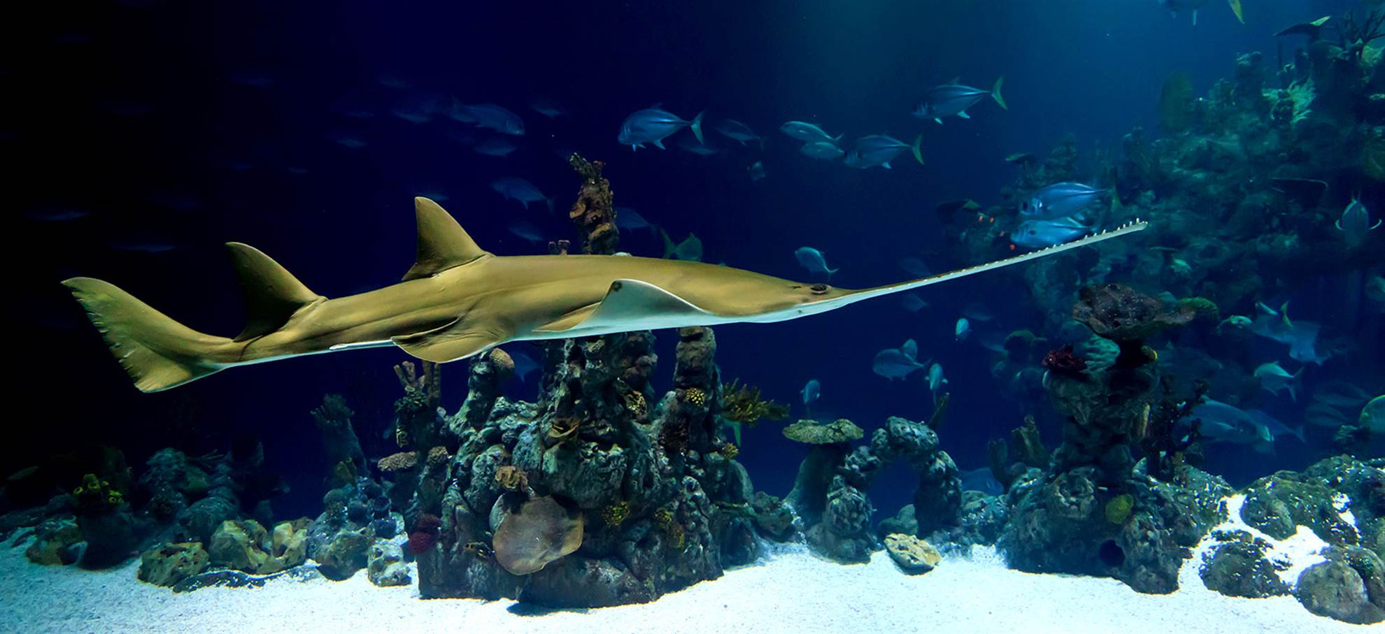 巴塞罗那水族馆