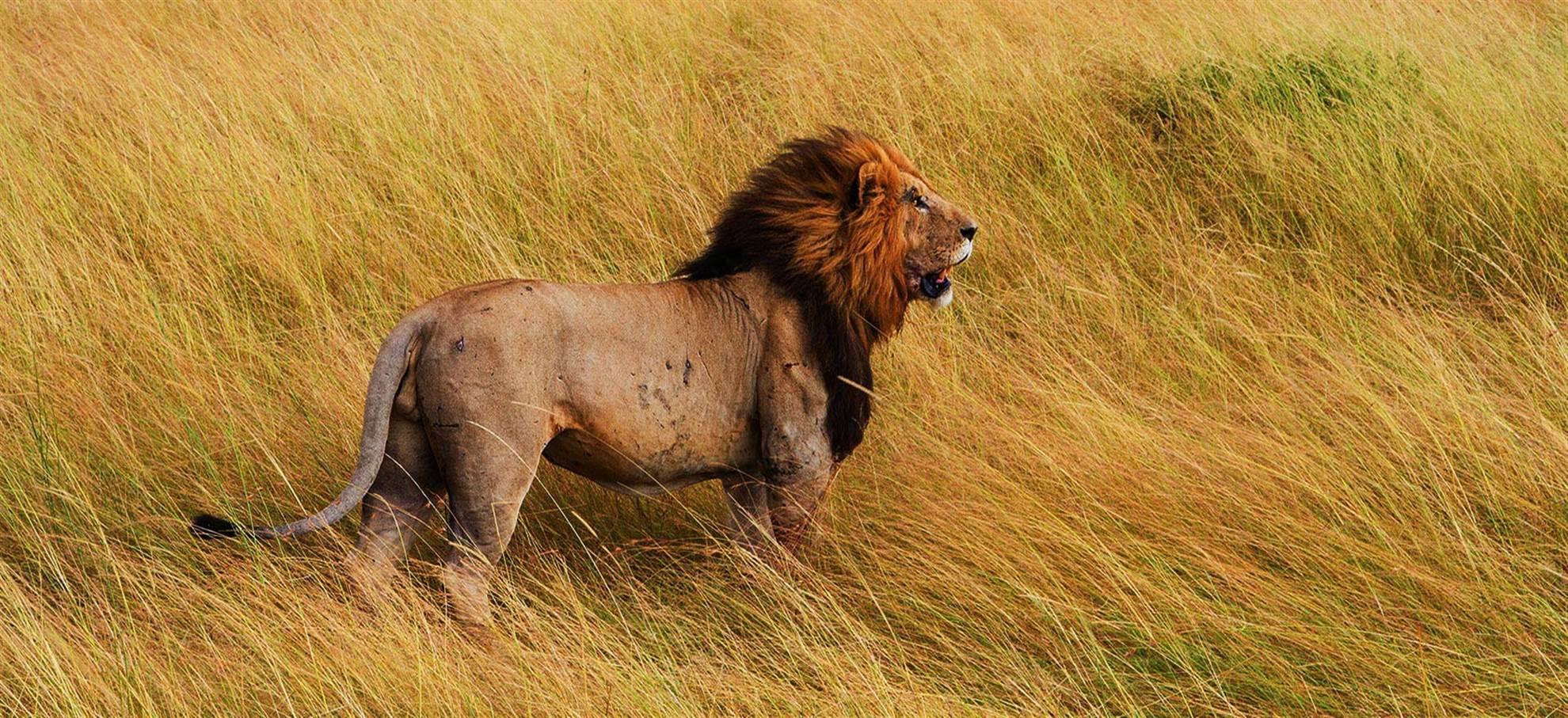 Combo Safari