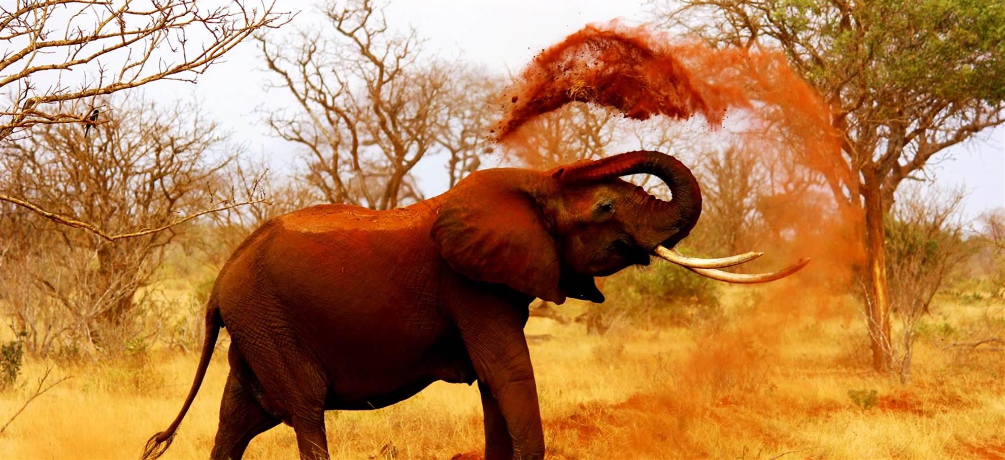 Excursion d'une journée au Safari