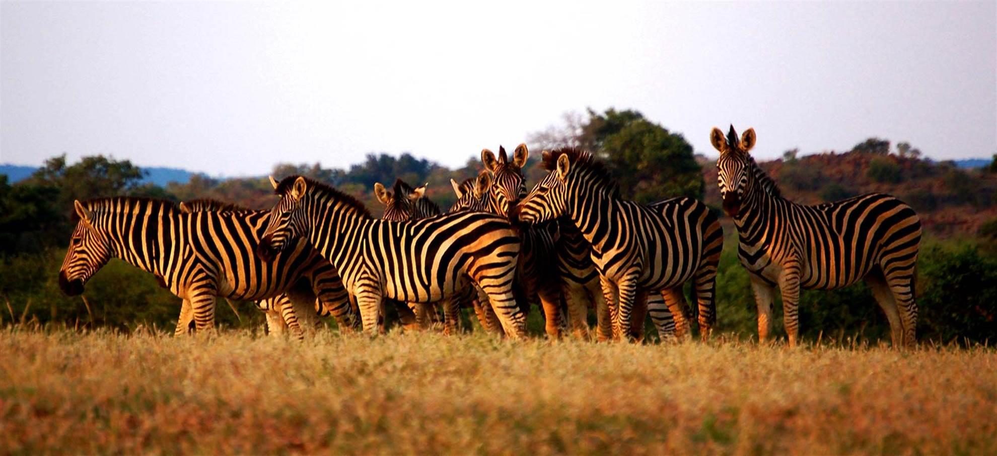 Pferde-Safari