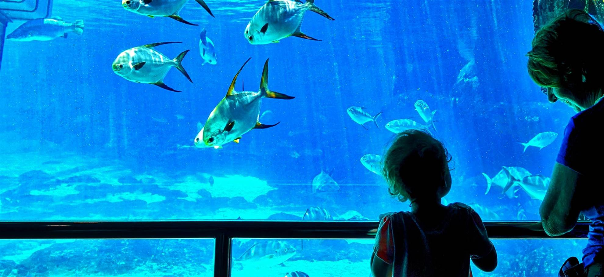 Oceanario Super Ticket