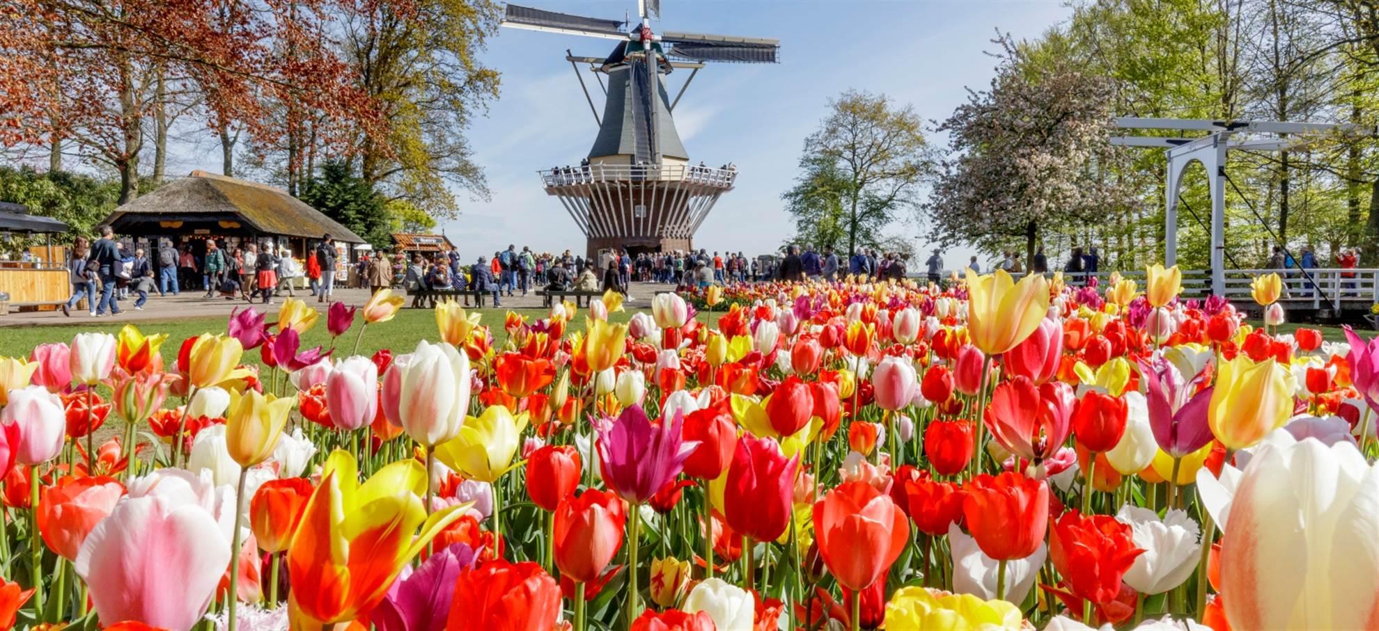 Tour to Keukenhof & Flowerfields from the Hague