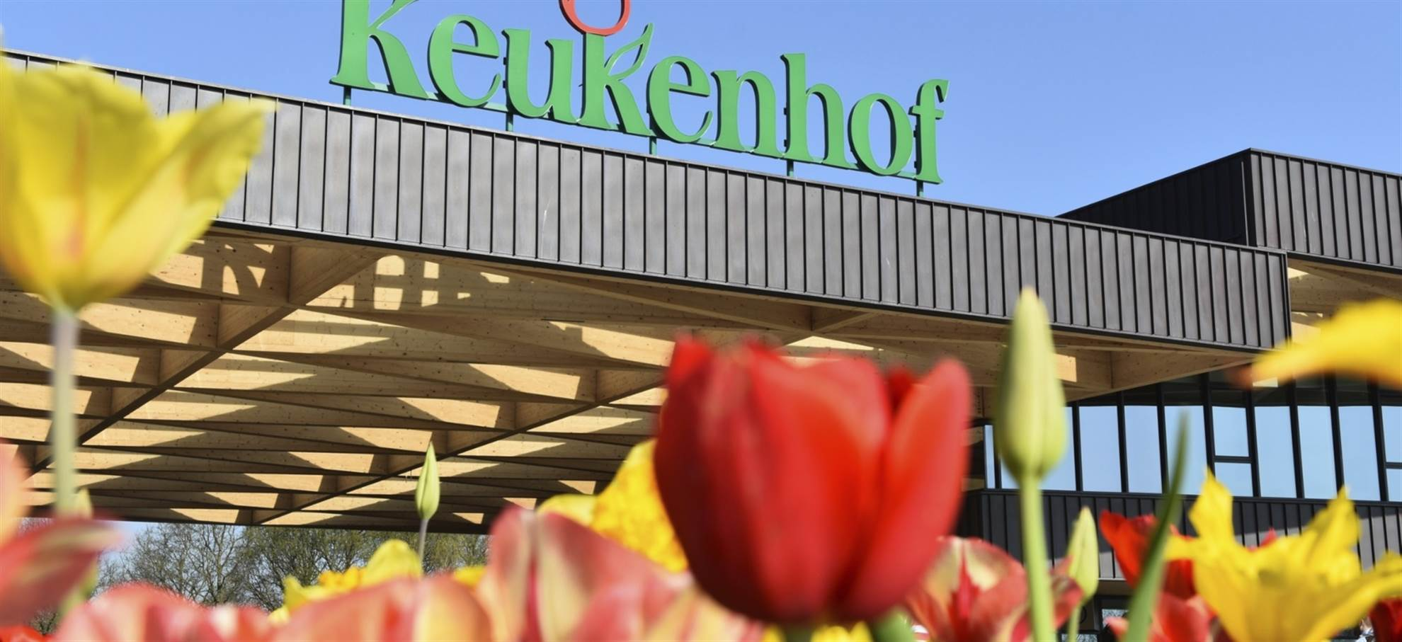 Keukenhof Tour from Rotterdam (Active and Bookable)