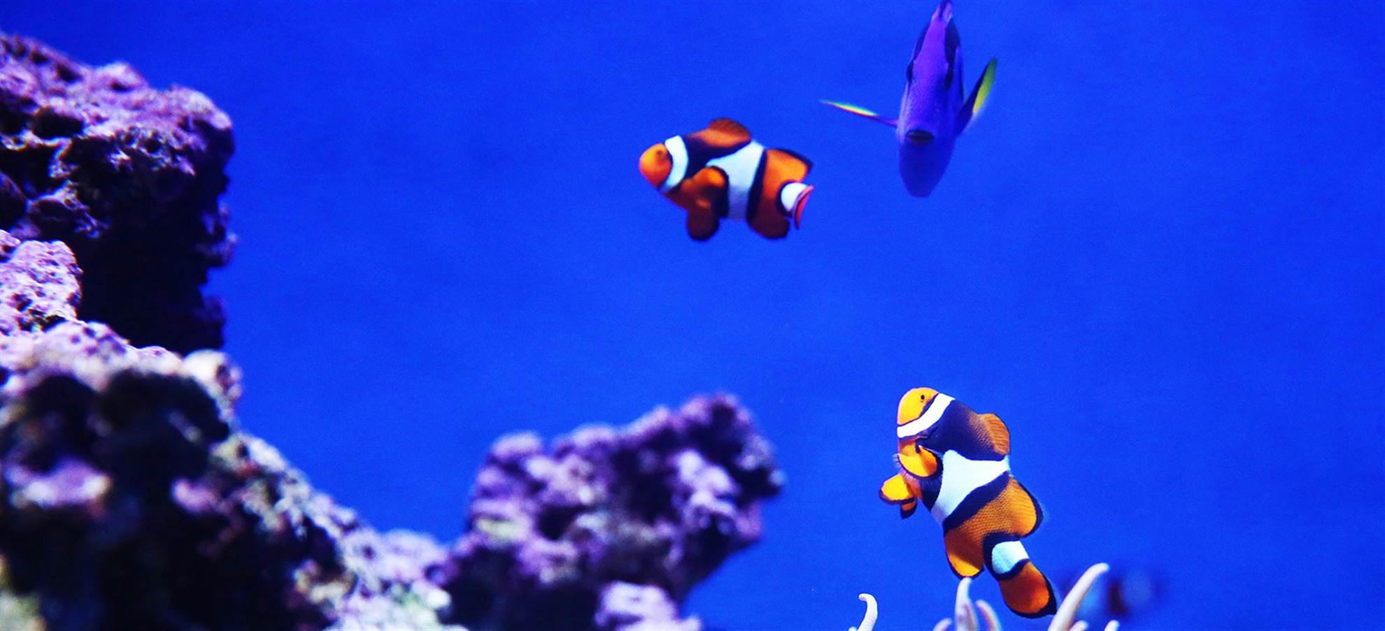 Grand City Tour + Aquarium of the Bay