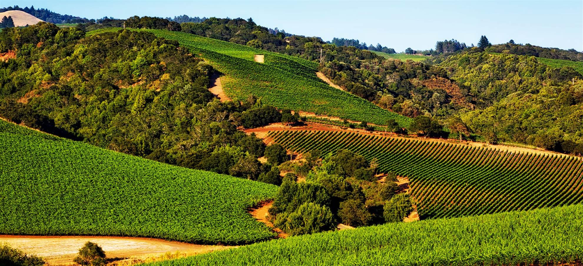 Sonoma & Napa Valley Wine Tour