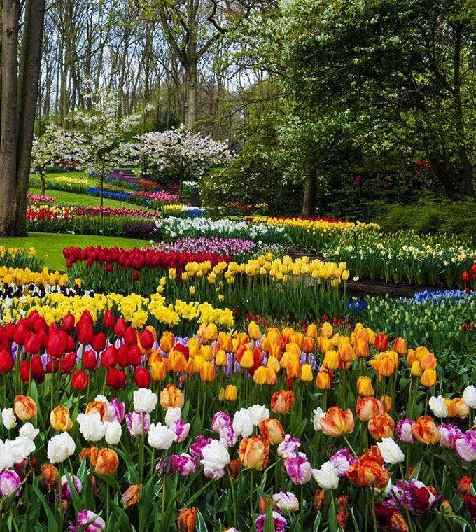 Jardín de flores de Keukenhof cerca de Amsterdam | Amsterdam.info