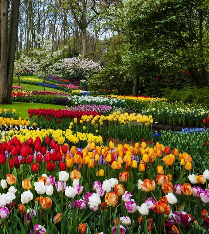 Keukenhof 2019 Skip the line Tickets