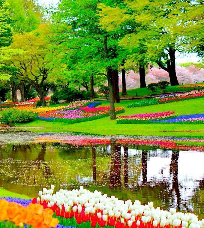 Keukenhof Tour con Guida dal vivo (English)