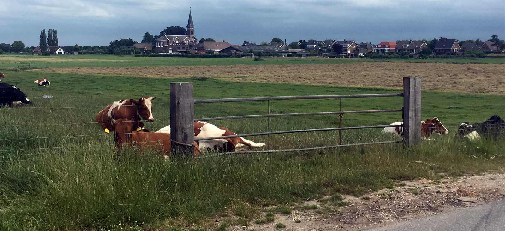 Dutch countryside bike tour: 'polder', windmills, lakes & cheese