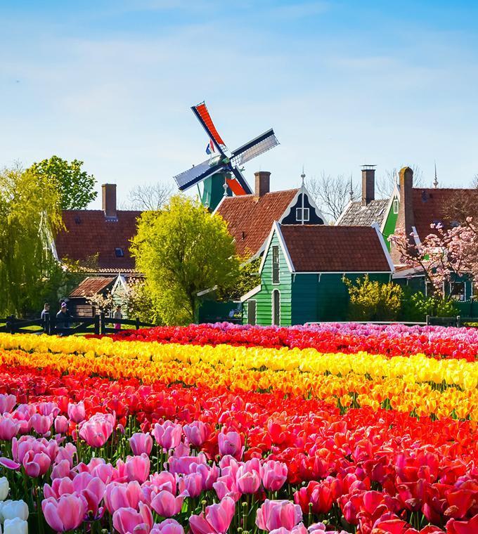 Tulip Amsterdam Keukenhof: Keukenhof Tour From Rotterdam