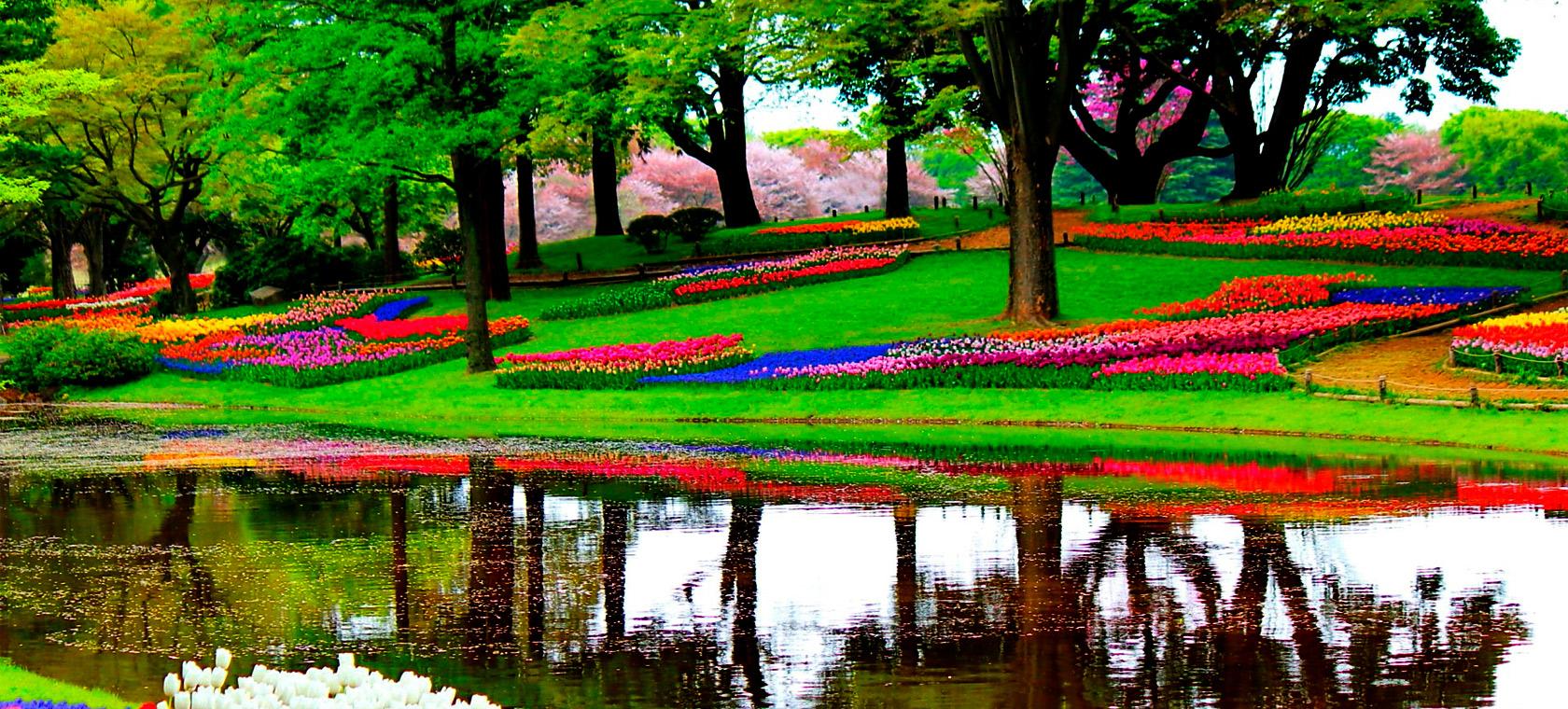 keukenhof gardens tour from amsterdam - Amsterdam Garden