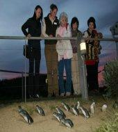 Penguin Express Tour