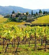 Chianti Classico Tour with Wine Tasting & Dinner
