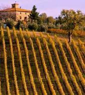 Chianti Classico, Montalcino e Montepulciano