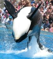 Sea World of San Diego with Hotel Pick up
