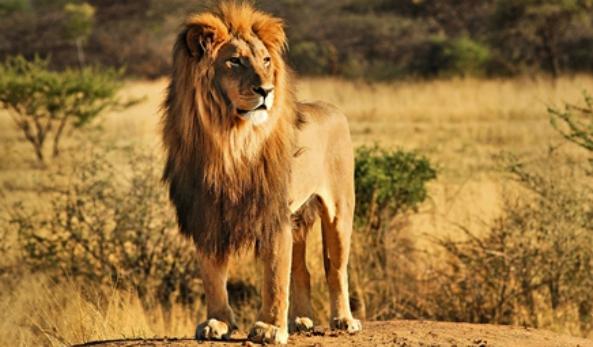 Afbeelding van Day Trip Safari