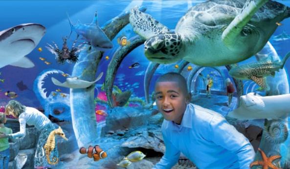 Afbeelding van Sea Life