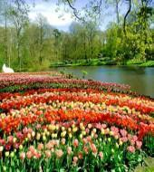 Keukenhof Tour from Rotterdam & The Hague